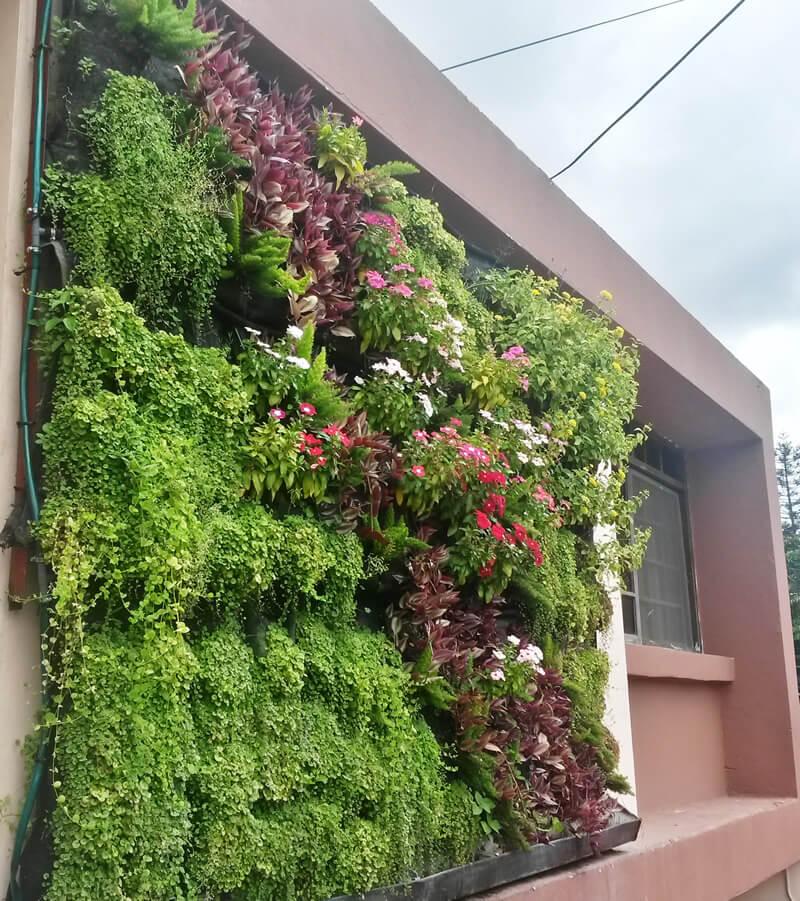 Suministro e Instalación de 8.64 m2 de pared verde sobre fachada principal en oficinas PROTEGER S.A.